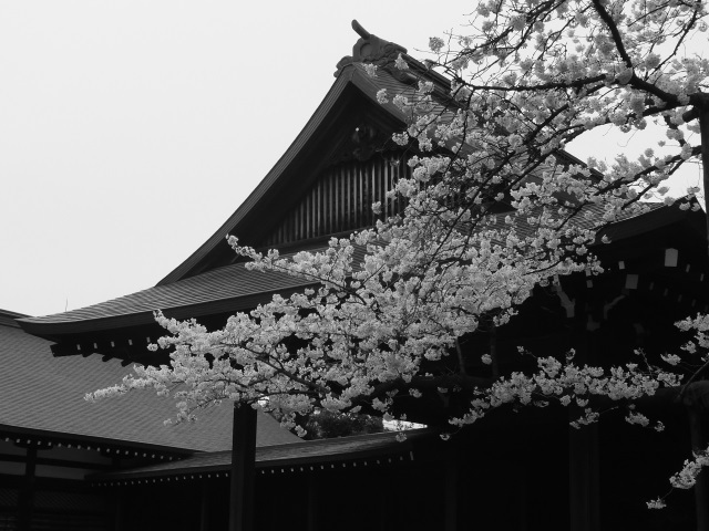 2016桜 037.jpg